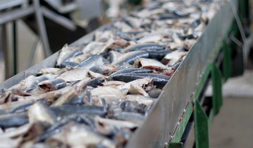 18-jwc-seafood-processing_1560x620
